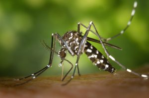 How to prevent dengue