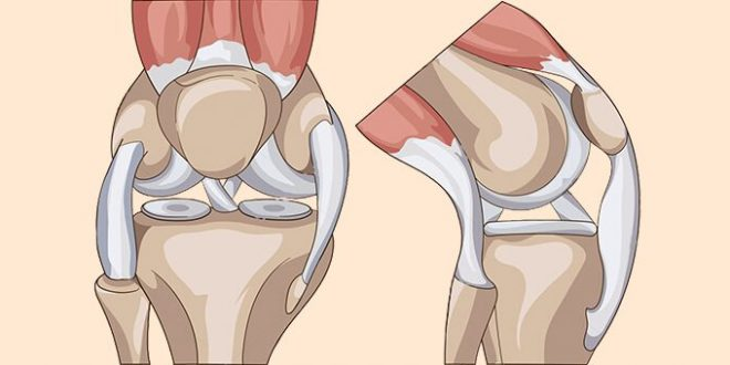 Knee-Cap-blog-post