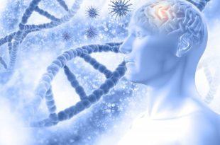 Alzheimer's Diseases