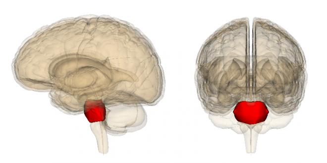 Brain tumor symptoms in hindi