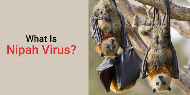 What is Nipah Virus - Nipah Virus Symptoms