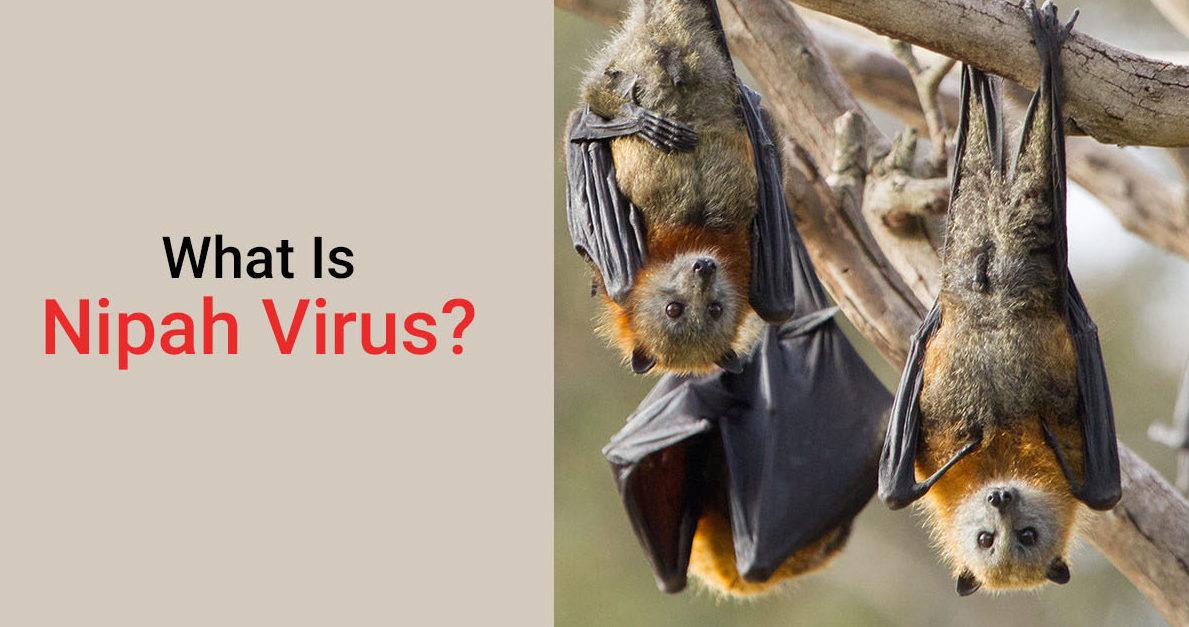 What is Nipah Virus - Nipah Virus Symptoms