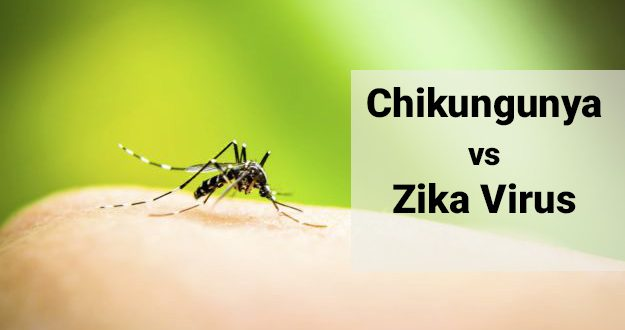 difference between chikungunya and zika virus