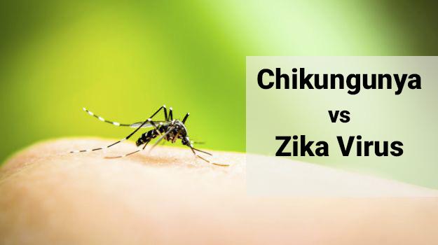 difference between chikungunya and zika virus