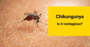 is chikungunya contagious?
