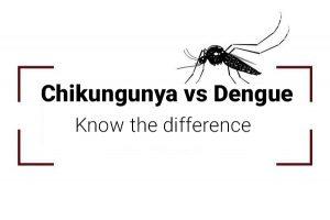 difference between chikungunya and dengue - chikungunya vs dengue
