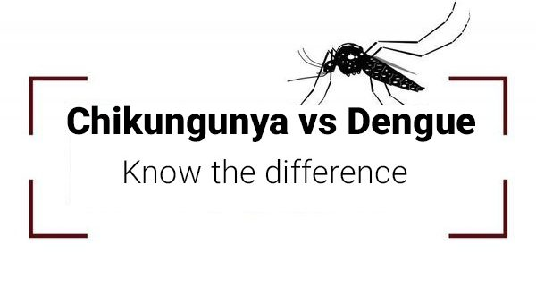 difference between chikungunya and dengue - chikungunya vs dengue