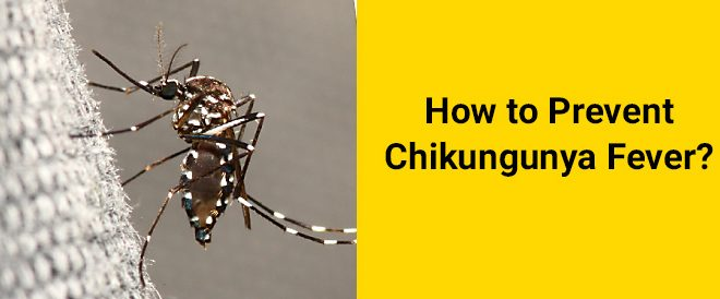 chikungunya prevention tips