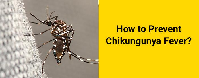 chikungunya prevention tips