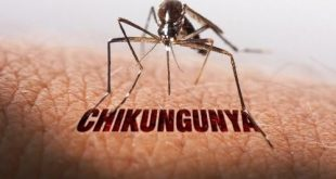 Chikungunya in Hindi