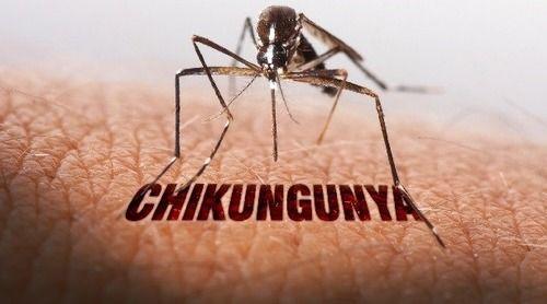 Chikungunya in Hindi