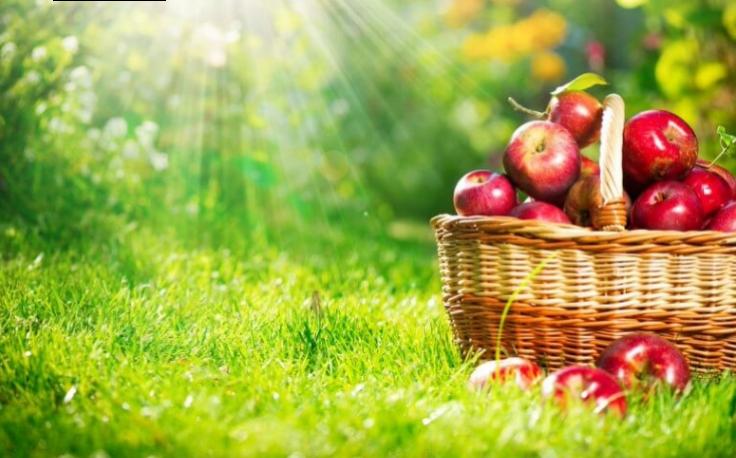 Apple benefits in Hindi, Benefits of Apple in Hindi