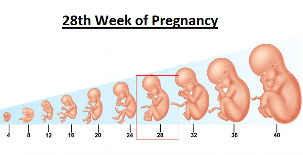 28th week of pregnancy, 28 weeks pregnant, 28 weeks pregnant symptoms,
