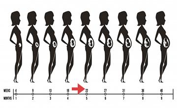 22nd week of pregnancy, body changes in the 22nd week of pregnancy
