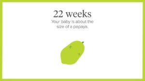 สัปดาห์ที่ 22 ของการตั้งครรภ์การเปลี่ยนแปลงของร่างกายในสัปดาห์ที่ 22 ของการตั้งครรภ์