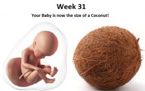 31st week of pregnancy, 31 weeks pregnant, 31 week pregnancy baby weight in kg