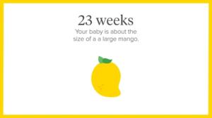 23rd week of pregnancy,