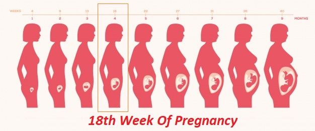 18th week of pregnancy, 18 weeks pregnant, 18 weeks pregnant symptoms