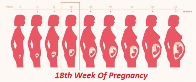 18th week of pregnancy, 18 weeks pregnant, 18 weeks pregnant symptoms