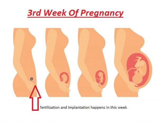 3rd week of pregnancy, pregnancy symptoms week 3, 3rd week pregnancy symptoms