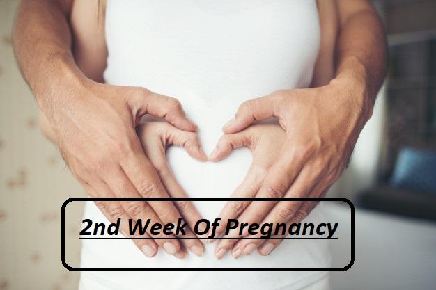 Pregnancy symptoms week 2, 2nd week of pregnancy, 2nd week pregnancy symptoms, 2 week pregnancy test at home