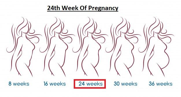 24th week of Pregnancy
