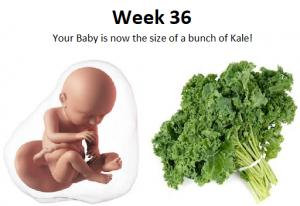 36th week of pregnancy, 36 weeks pregnant, 36 weeks pregnant symptoms, baby at 36 weeks