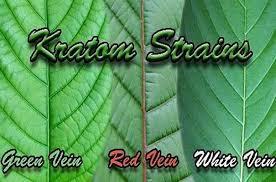 Kratom types