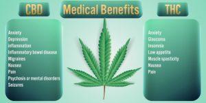 Benefícios do CBD para a saúde