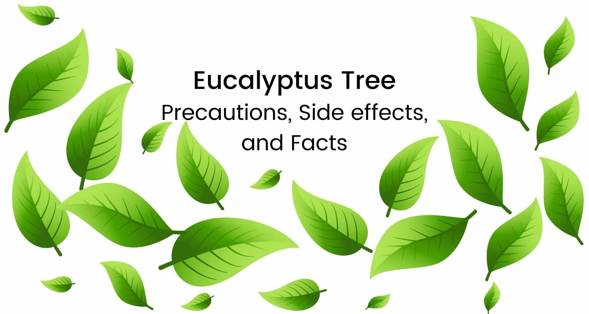 Eucalyptus-Tree-Precautions-Side-effects-and-Facts